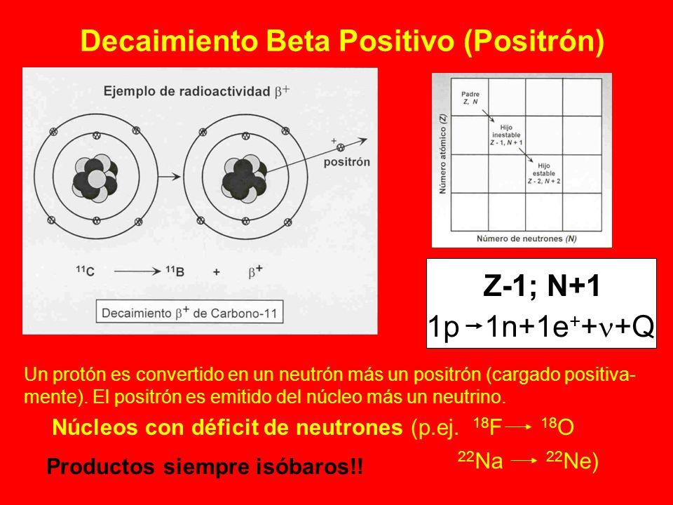 Decaimiento Beta Positivo (Positrón) Z-1; N+1 1p 1n+1e + + +Q Un protón es convertido en un neutrón más un positrón (cargado positiva- mente). El posi