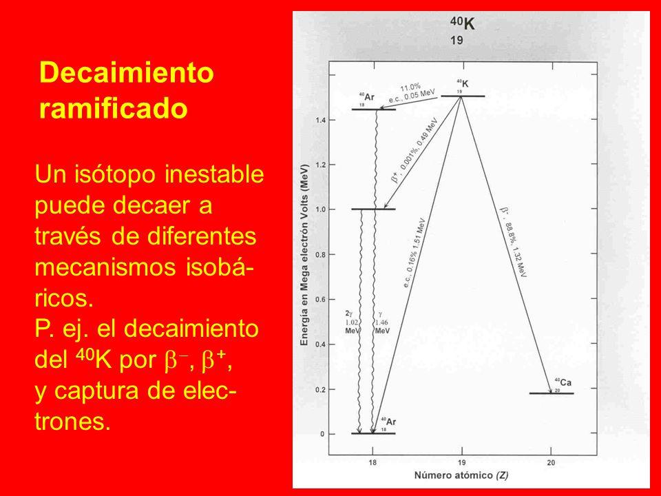 Decaimiento ramificado Un isótopo inestable puede decaer a través de diferentes mecanismos isobá- ricos. P. ej. el decaimiento del 40 K por, +, y capt