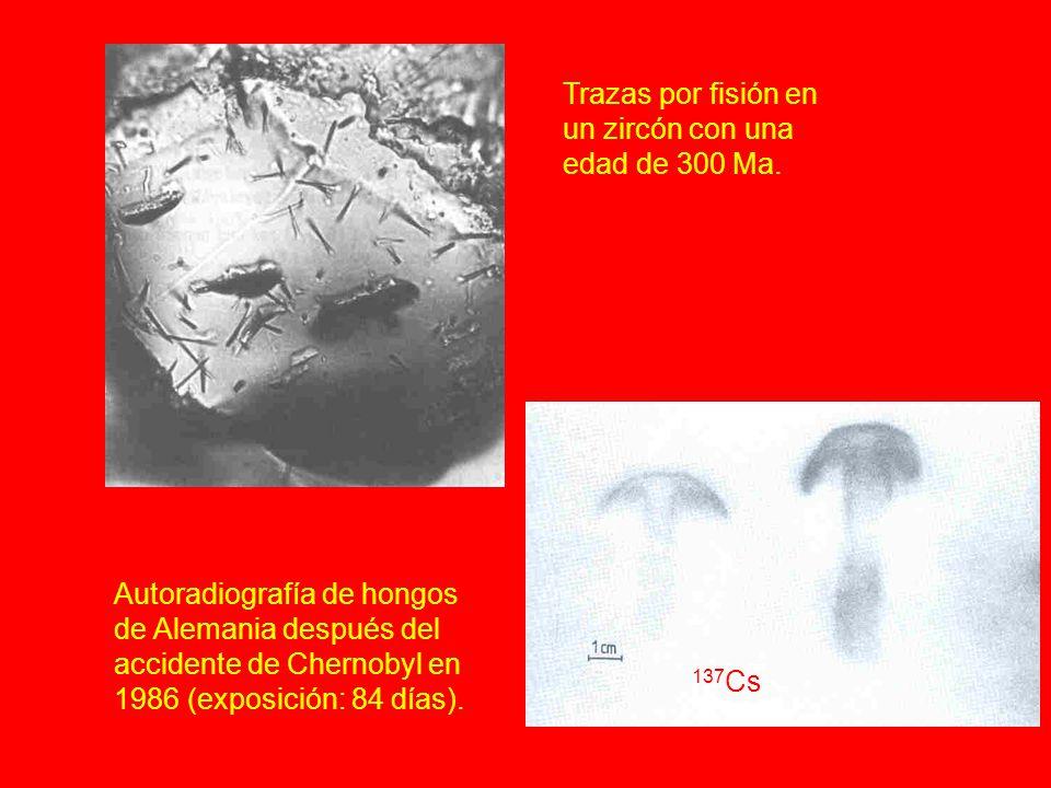 Autoradiografía de hongos de Alemania después del accidente de Chernobyl en 1986 (exposición: 84 días). 137 Cs Trazas por fisión en un zircón con una
