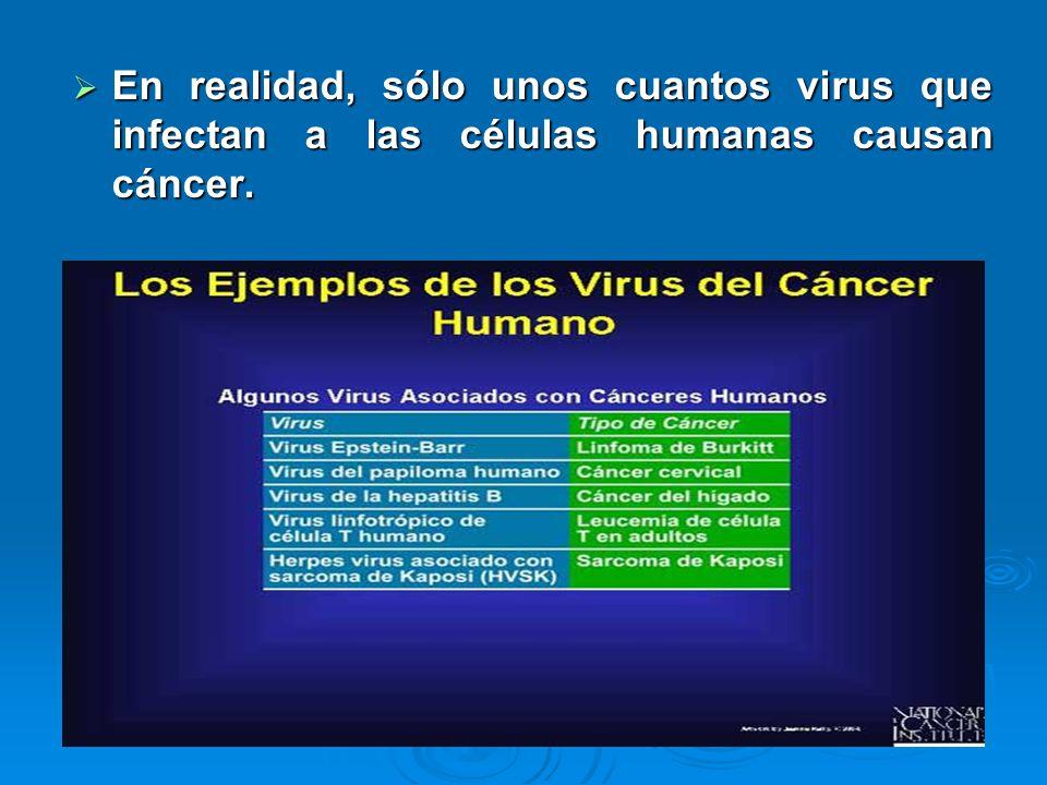 En realidad, sólo unos cuantos virus que infectan a las células humanas causan cáncer. En realidad, sólo unos cuantos virus que infectan a las células