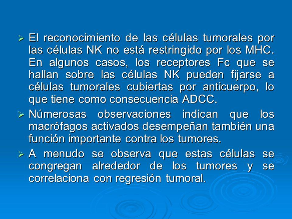 El reconocimiento de las células tumorales por las células NK no está restringido por los MHC. En algunos casos, los receptores Fc que se hallan sobre