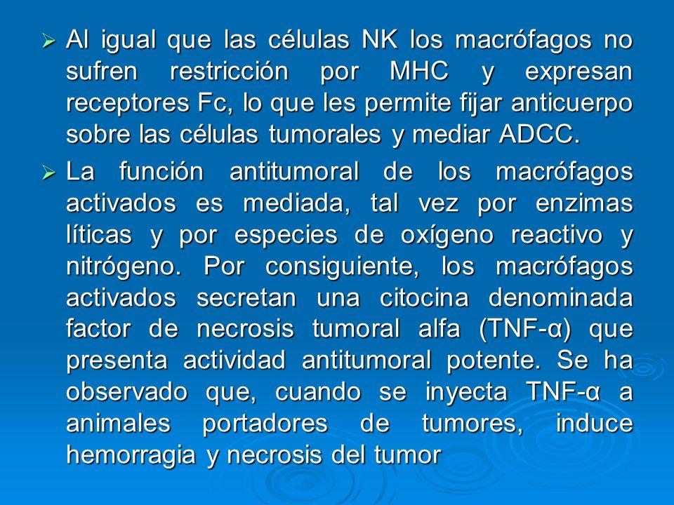 Al igual que las células NK los macrófagos no sufren restricción por MHC y expresan receptores Fc, lo que les permite fijar anticuerpo sobre las célul