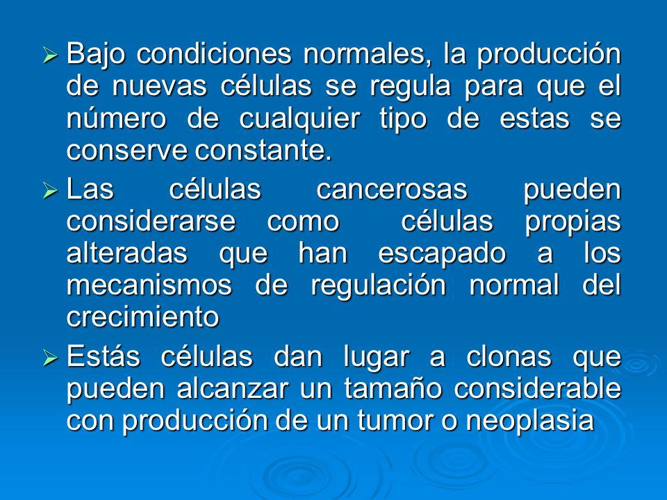 Bajo condiciones normales, la producción de nuevas células se regula para que el número de cualquier tipo de estas se conserve constante. Bajo condici