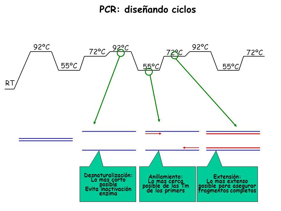 RT 92ºC 55ºC 72ºC 92ºC 55ºC 72ºC Desnaturalización: Lo mas corto posible Evita inactivación enzima Anillamiento: Lo mas cerca posible de las Tm de los
