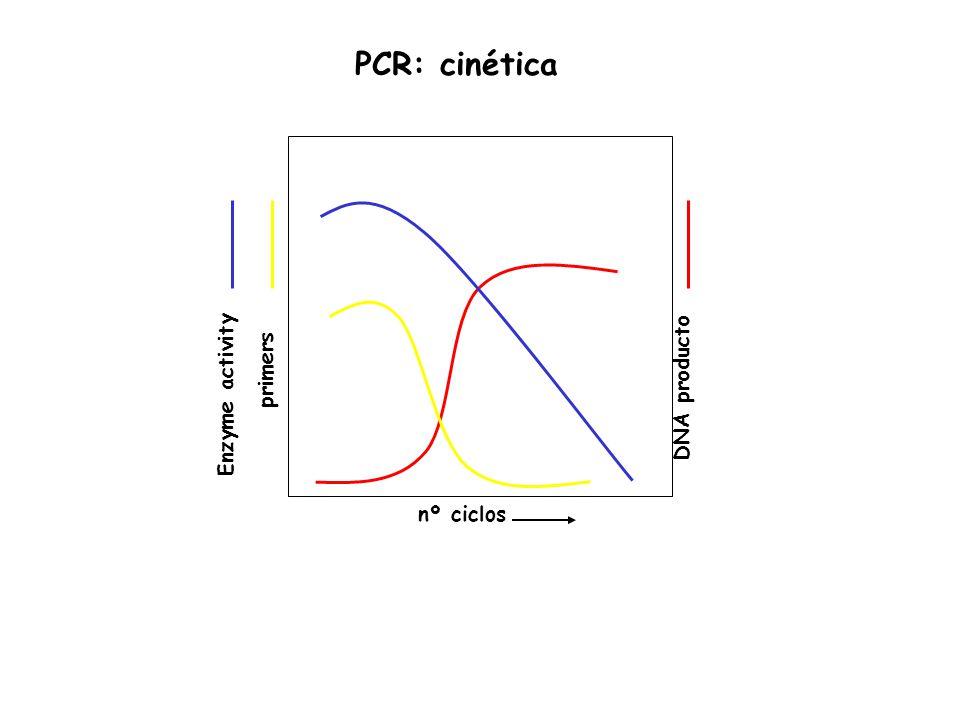 nº ciclos DNA producto primers Enzyme activity PCR: cinética