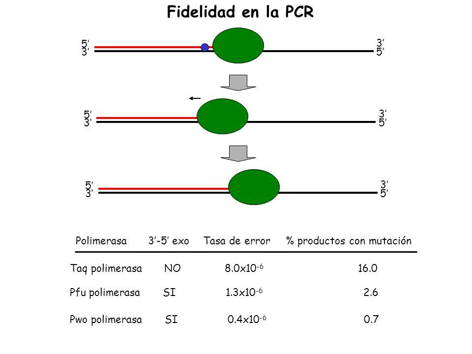 5 3 3 5 5 3 3 5 5 3 3 5 Polimerasa 3-5 exoTasa de error% productos con mutación Taq polimerasa NO 8.0x10 -6 16.0 Pfu polimerasa SI 1.3x10 -6 2.6 Pwo p