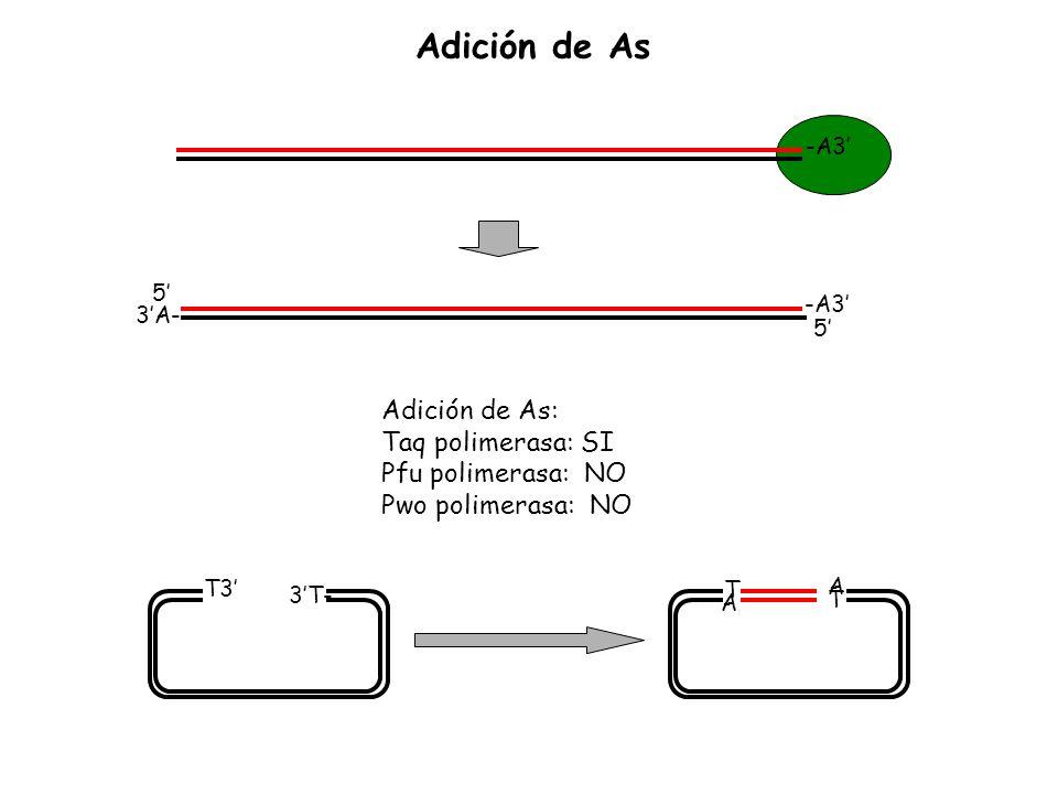 -A3 5 3A- 5 Adición de As: Taq polimerasa: SI Pfu polimerasa: NO Pwo polimerasa: NO -A3 -T3 3T- -T A ATAT Adición de As