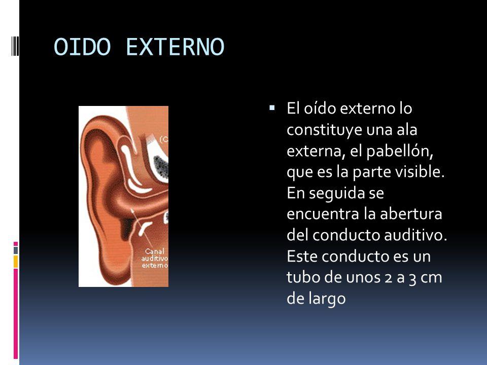 OIDO EXTERNO El oído externo lo constituye una ala externa, el pabellón, que es la parte visible. En seguida se encuentra la abertura del conducto aud