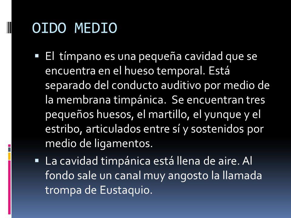 OIDO MEDIO El tímpano es una pequeña cavidad que se encuentra en el hueso temporal. Está separado del conducto auditivo por medio de la membrana timpá