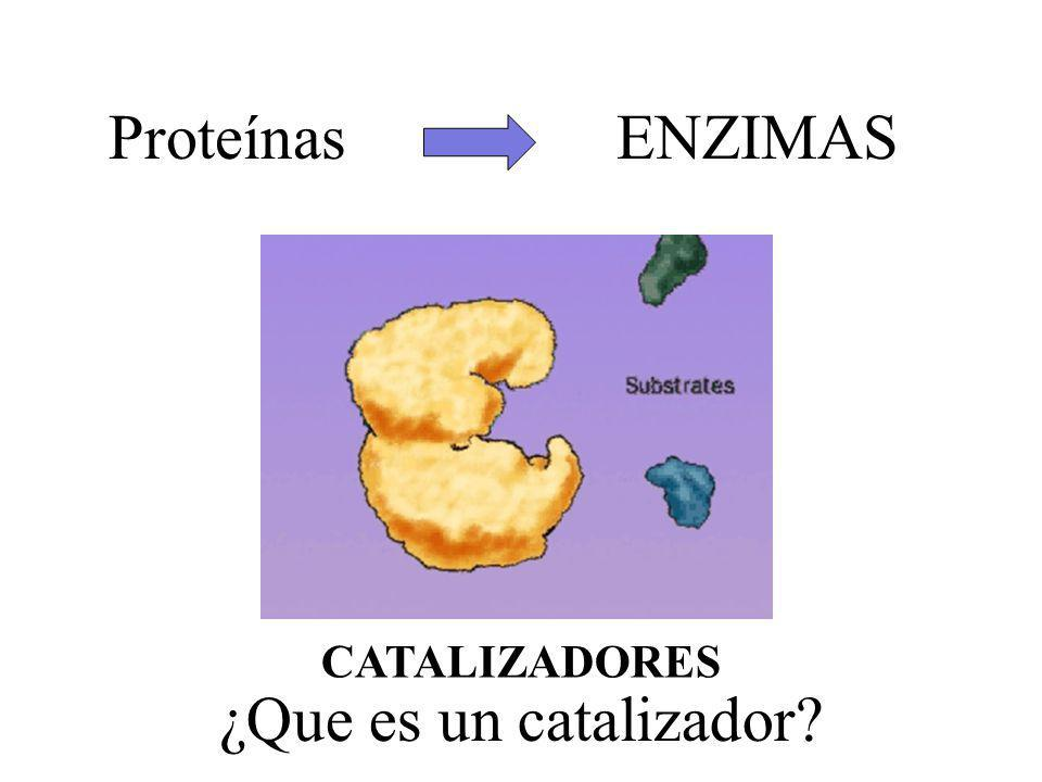 Proteínas ENZIMAS CATALIZADORES ¿Que es un catalizador?