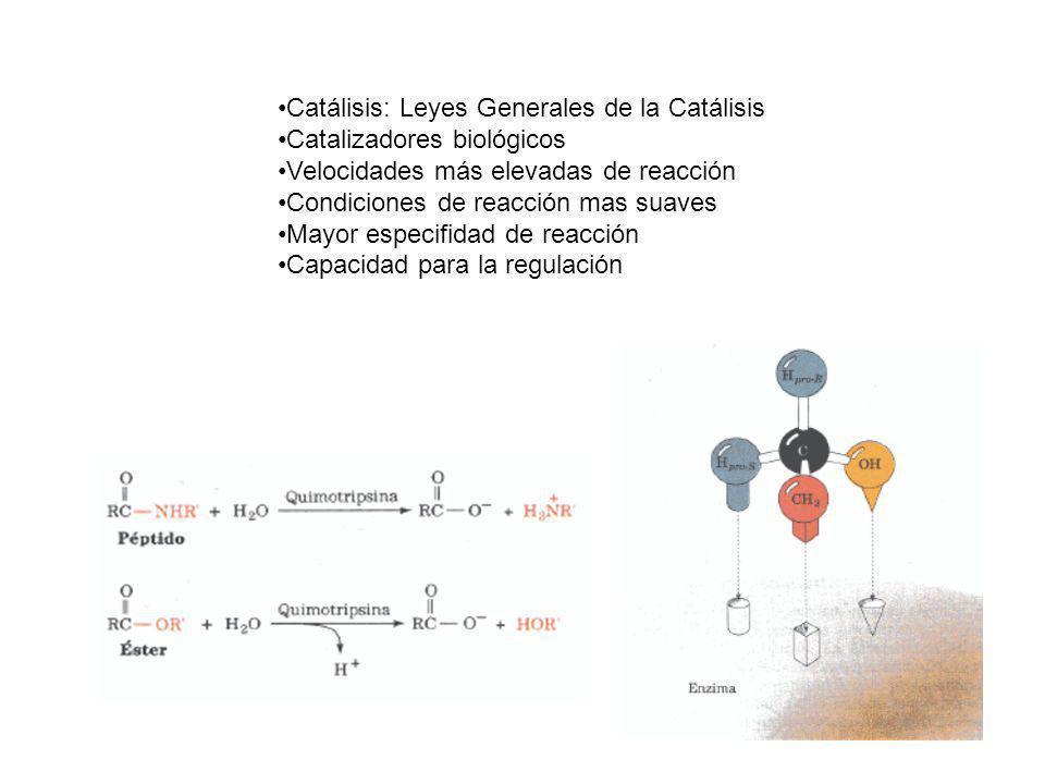 Catálisis: Leyes Generales de la Catálisis Catalizadores biológicos Velocidades más elevadas de reacción Condiciones de reacción mas suaves Mayor espe