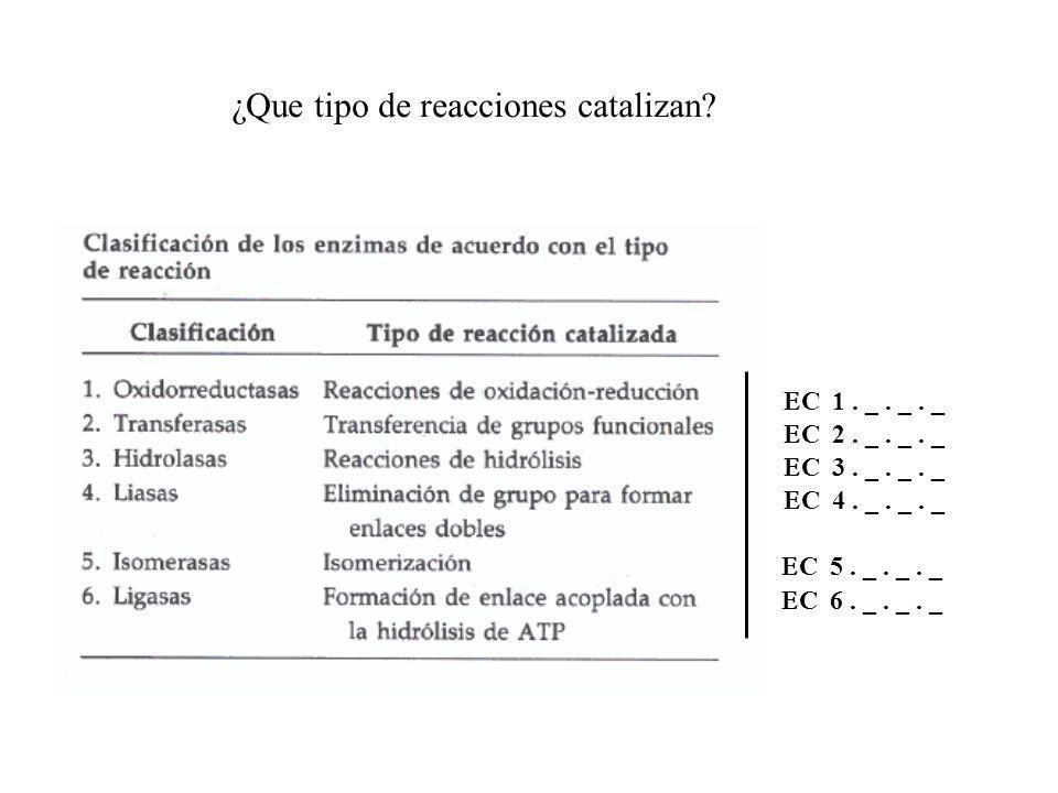 ¿Que tipo de reacciones catalizan? C 1. _. _. _ C 2. _. _. _ C 3. _. _. _ C 4. _. _. _ C 5. _. _. _ C 6. _. _. _