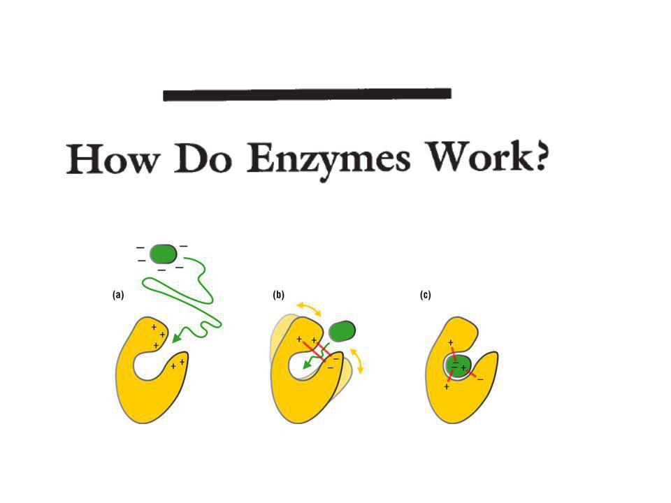 Analysis of Catalytic Residues in Enzyme Active Sites JMB (2002) 324, 105-121