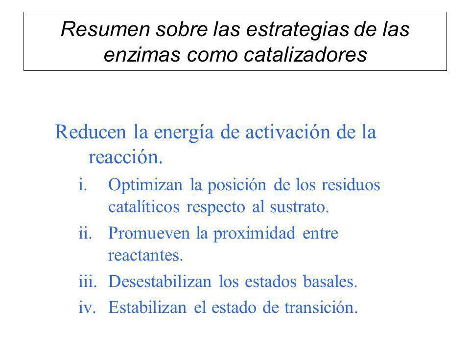 Resumen sobre las estrategias de las enzimas como catalizadores Reducen la energía de activación de la reacción. i.Optimizan la posición de los residu