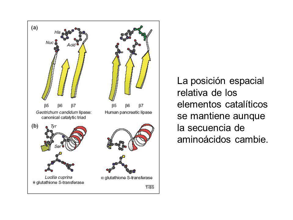 Cholinesterase Dienelactone hidrolase Lipase/Cutinase Thioestearase Serine Carboxypeptidase Prolyl Imino/Oligo peptidase Bromoperoxidase Haloalkane dehalogenase Fluoroacetate dehalogenase Epoxide hydrolase Hydroxynitrile lyase C-C Hydrolase 2,4-Dioxygenase Amilasa TIM barrels
