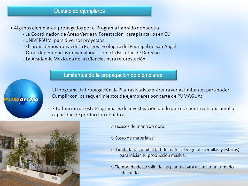 Con las limitantes mencionadas anteriormente se esta realizando la propagación de las plantas solicitadas para el Proyecto PUMAGUA.