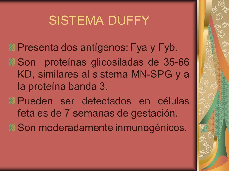 SISTEMA DUFFY El fenotipo Fy(a+b+) está presente en 49% de la población blanca, el fenotipo Fy(a+b-) en el 90.8% de la población china y Fy(a-b- ) en el 68% de la población negra.
