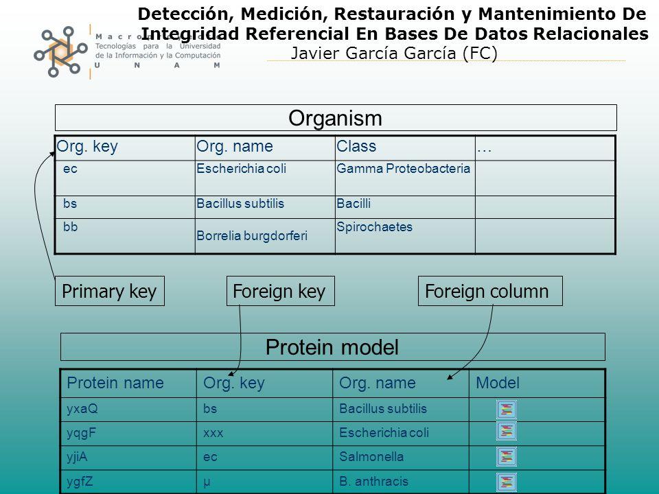Detección, Medición, Restauración y Mantenimiento De Integridad Referencial En Bases De Datos Relacionales Javier García García (FC) Organism Protein model Foreign keyForeign columnPrimary key Org.
