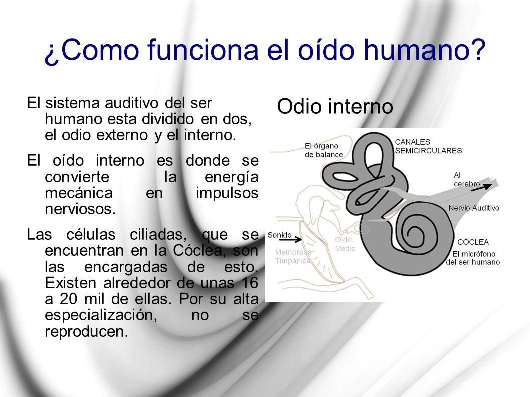 ¿Como funciona el oído humano? El sistema auditivo del ser humano esta dividido en dos, el odio externo y el interno. El oído interno es donde se conv