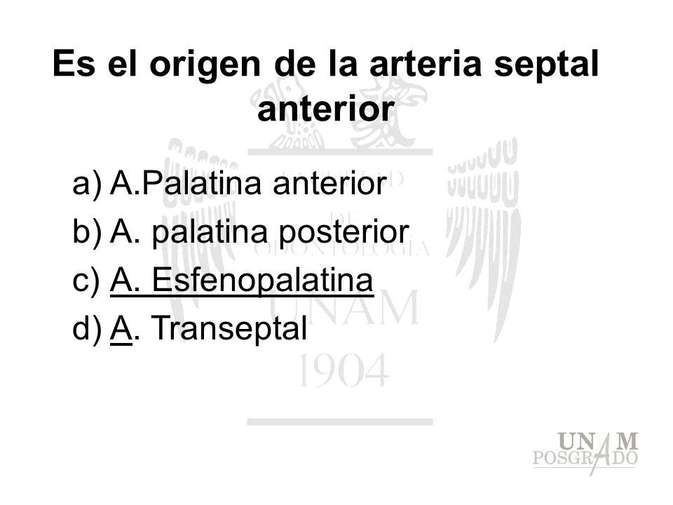 a)A.Palatina anterior b)A. palatina posterior c)A. Esfenopalatina d)A. Transeptal Es el origen de la arteria septal anterior
