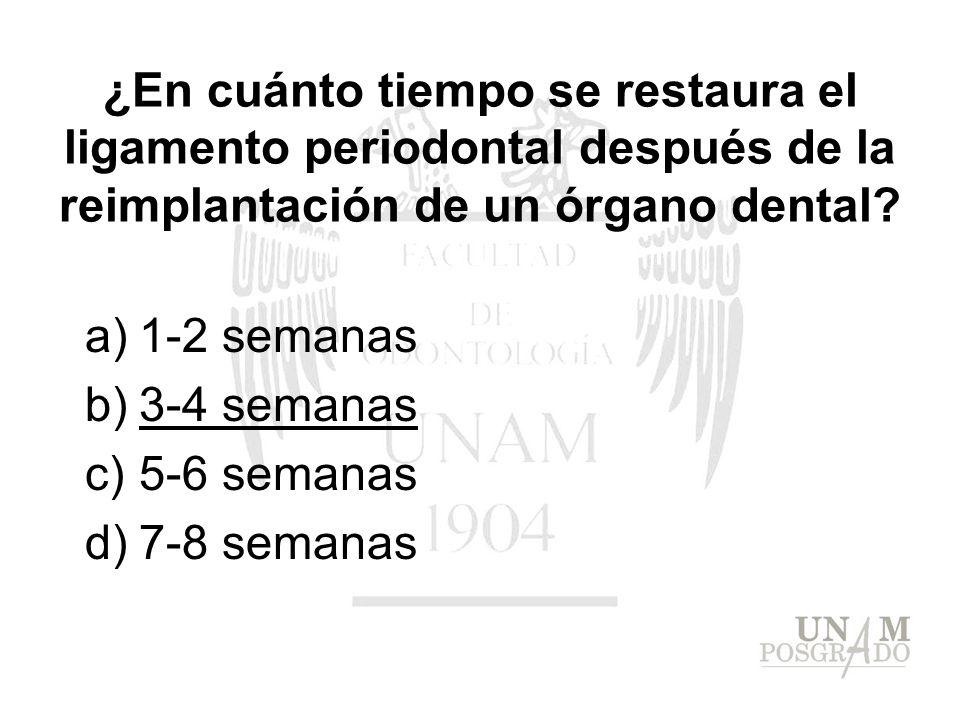 a)1-2 semanas b)3-4 semanas c)5-6 semanas d)7-8 semanas ¿En cuánto tiempo se restaura el ligamento periodontal después de la reimplantación de un órga