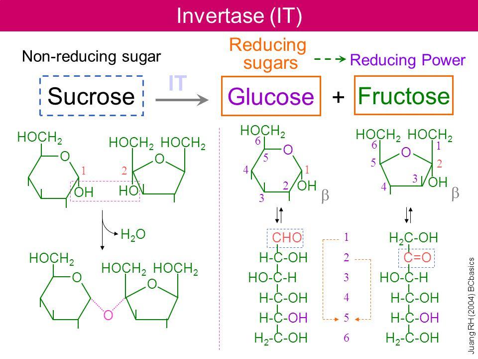 Invertase (IT) IT Sucrose Non-reducing sugar Reducing sugars Glucose Fructose Reducing Power + HOCH 2 O OH 1 2 3 4 5 6 6 5 4 3 2 1 123456123456 HOCH 2 O OH O HOCH 2 OH H2OH2O O HOCH 2 HO O HOCH 2 O O b b CHO H-C-OH HO-C-H H-C-OH H-C-OH H 2 -C-OH H 2 C-OH C=O HO-C-H H-C-OH H-C-OH H 2 -C-OH Juang RH (2004) BCbasics 12