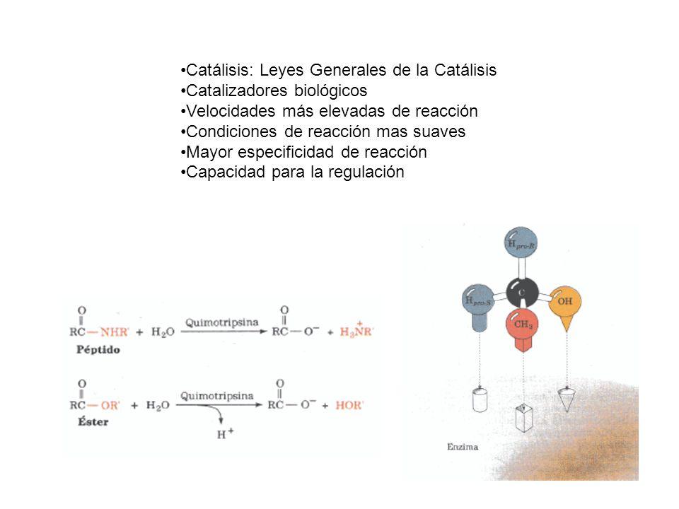 Catálisis: Leyes Generales de la Catálisis Catalizadores biológicos Velocidades más elevadas de reacción Condiciones de reacción mas suaves Mayor especificidad de reacción Capacidad para la regulación