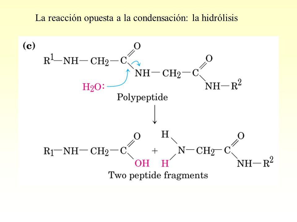 La reacción opuesta a la condensación: la hidrólisis