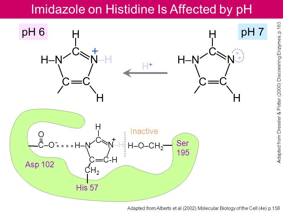 Imidazole on Histidine Is Affected by pH H–N N C C C H H H+H+ pH 6pH 7 + H–N N–H C C C H H Inactive + Ser 195 His 57 Asp 102 H–O–CH 2 O C–O - = H–N N–
