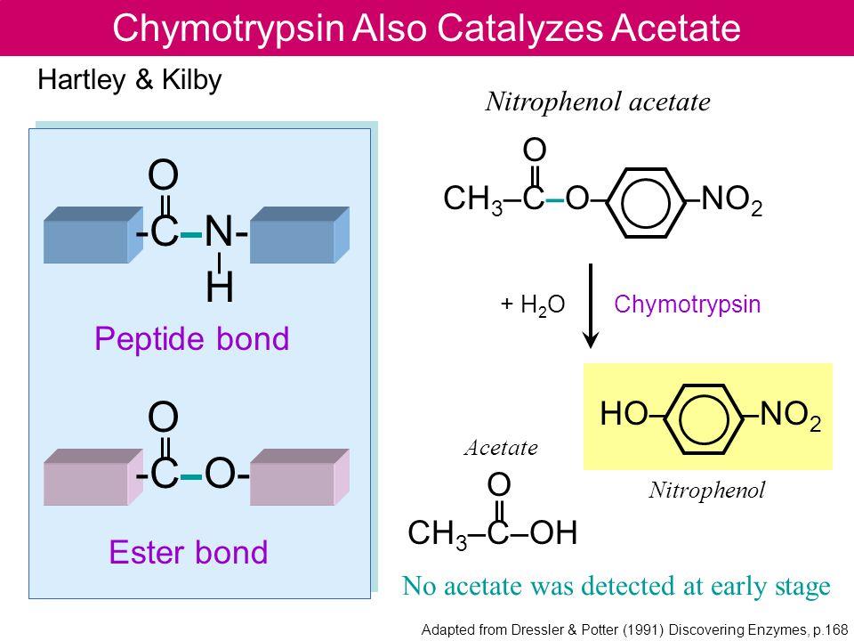 Chymotrypsin Also Catalyzes Acetate O -C N- H O -C O- Peptide bond Ester bond O CH 3 –C–O– –NO 2 Nitrophenol acetate HO– –NO 2 O CH 3 –C–OH Hartley &