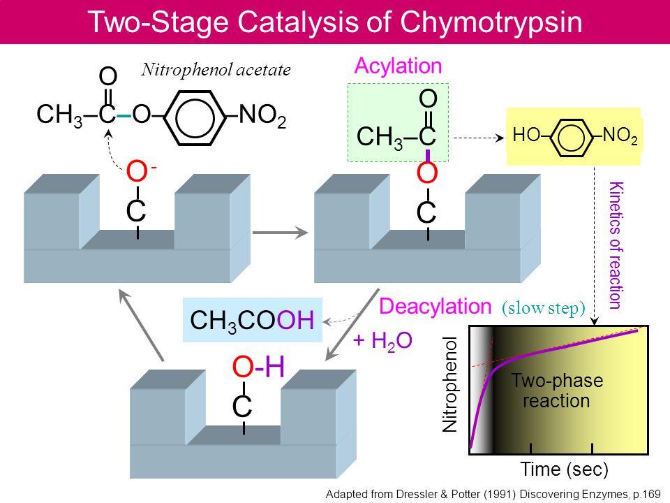O -CO -C Time (sec) Nitrophenol Two-Stage Catalysis of Chymotrypsin O CH 3 –C–O– –NO 2 Nitrophenol acetate OCOC O CH 3 –C HO– –NO 2 + H 2 O O-H C CH 3