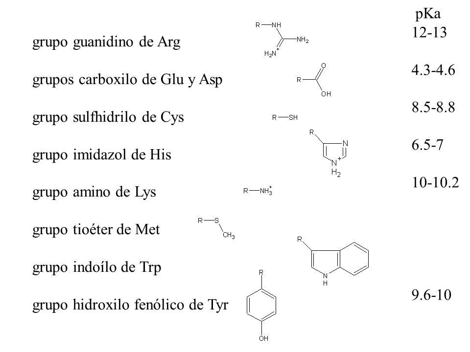 grupo guanidino de Arg grupos carboxilo de Glu y Asp grupo sulfhidrilo de Cys grupo imidazol de His grupo amino de Lys grupo tioéter de Met grupo indo