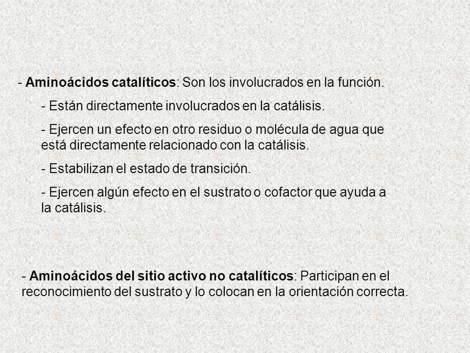 - Aminoácidos catalíticos: Son los involucrados en la función. - Están directamente involucrados en la catálisis. - Ejercen un efecto en otro residuo
