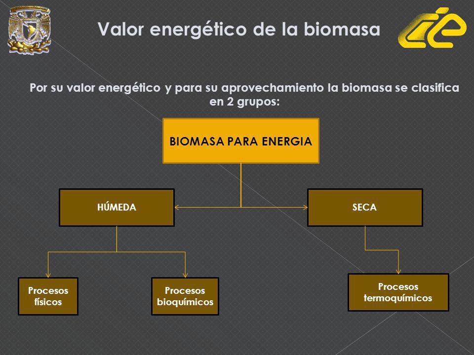 Valor energético de la biomasa Por su valor energético y para su aprovechamiento la biomasa se clasifica en 2 grupos: BIOMASA PARA ENERGIA HÚMEDASECA Procesos físicos Procesos bioquímicos Procesos termoquímicos