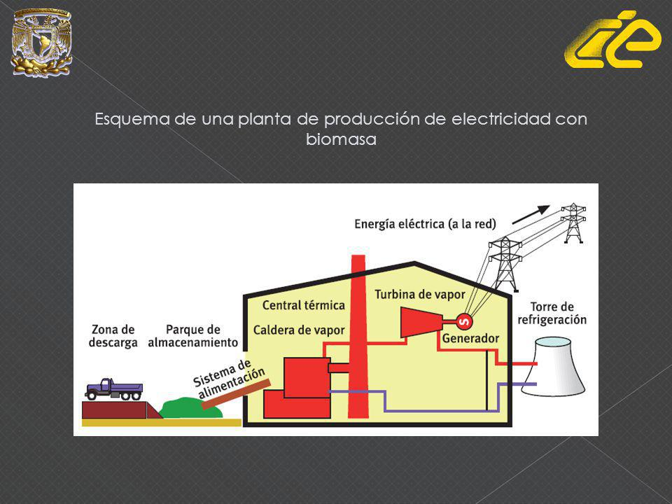 Esquema de una planta de producción de electricidad con biomasa