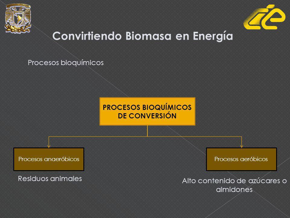 Procesos bioquímicos Convirtiendo Biomasa en Energía PROCESOS BIOQUÍMICOS DE CONVERSIÓN Procesos anaeróbicosProcesos aeróbicos Residuos animales Alto contenido de azúcares o almidones