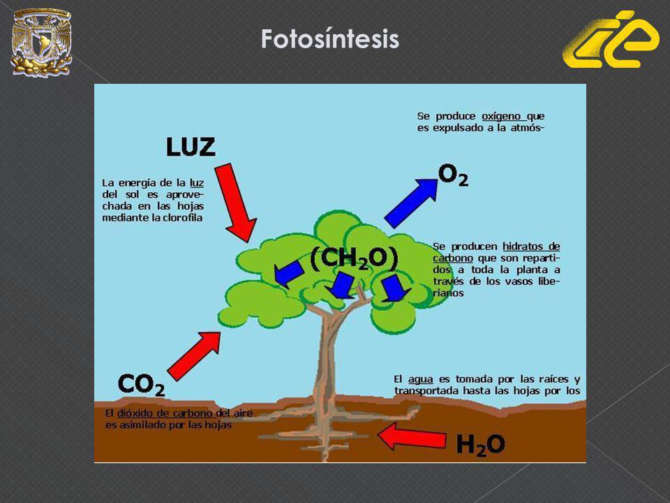 Ciclo de la biomasa 1.Absorción de CO2 2.El hombre cultiva y usa la biomasa 3.Es desechada en basureros 4.Centrales de biomasa(producir energía)
