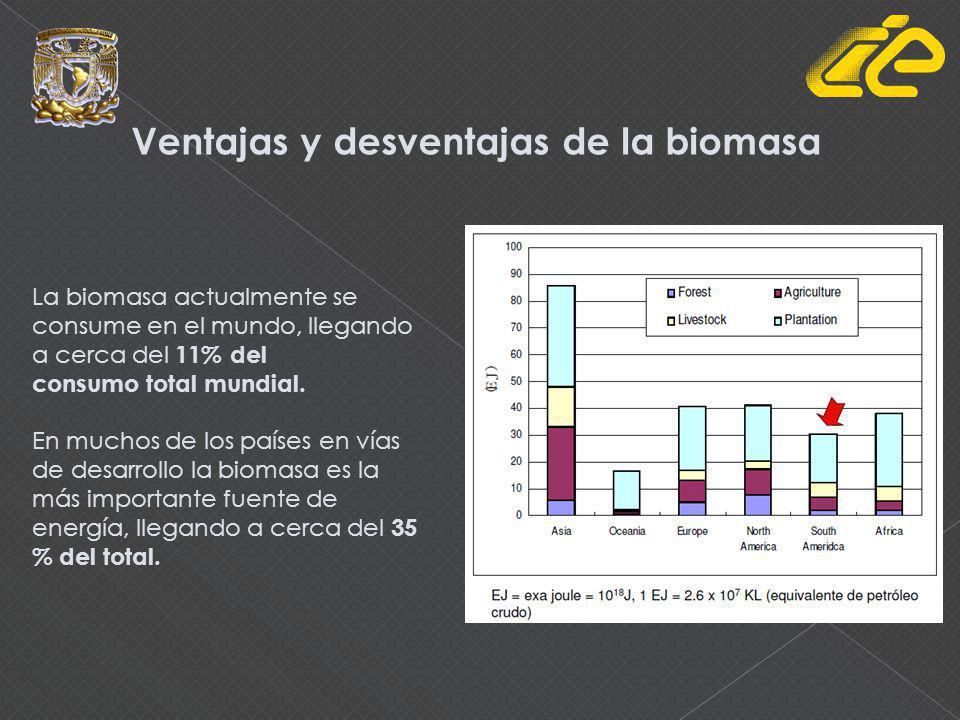Importancia del uso de bioenergía en el mundo: 11 millones de hogares se iluminan con biogás 250 millones de estufas eficientes de leña 38,000 MWe de capacidad instalada para producción de electricidad 30 mil millones de litros/año de etanol 180 millones de personas viven en países con normas para mezclar etanol con gasolina