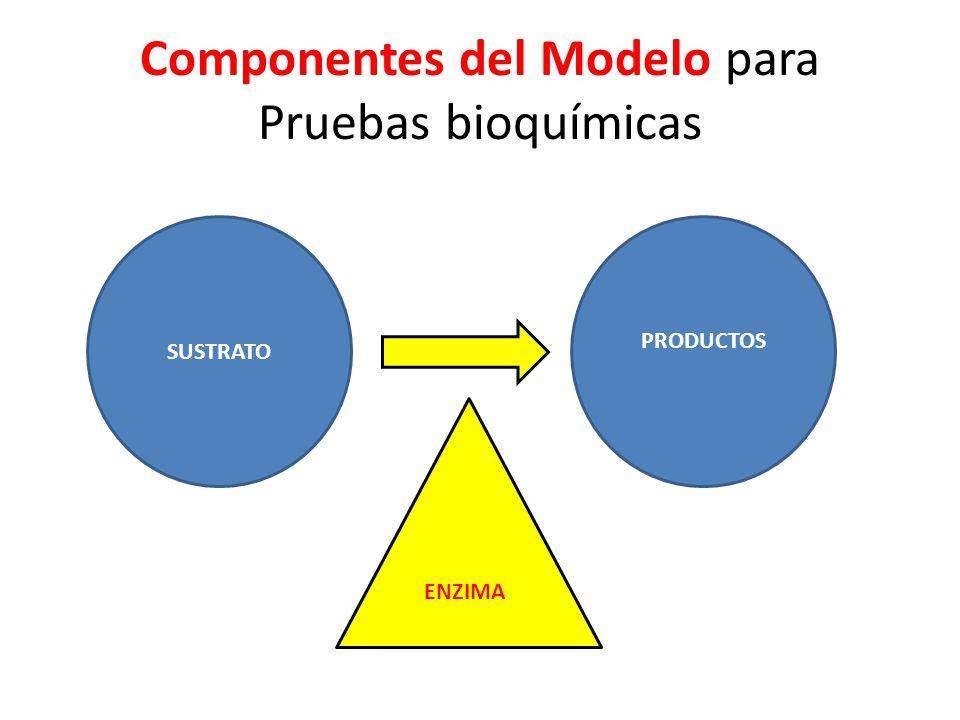 Componentes del Modelo para Pruebas bioquímicas SUSTRATO PRODUCTOS ENZIMA