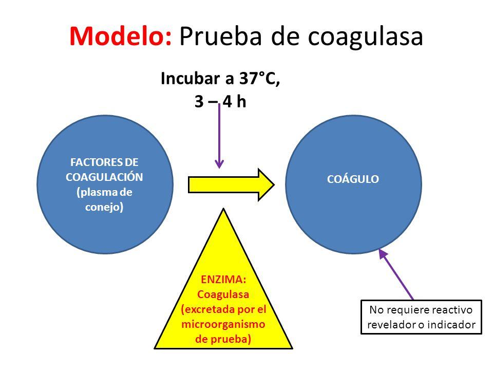 Modelo: Prueba de coagulasa FACTORES DE COAGULACIÓN (plasma de conejo) COÁGULO ENZIMA: Coagulasa (excretada por el microorganismo de prueba) No requiere reactivo revelador o indicador Incubar a 37°C, 3 – 4 h