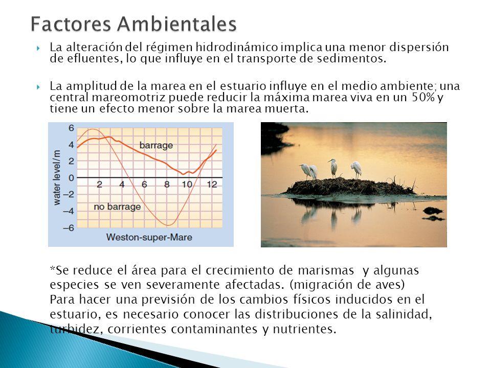 La alteración del régimen hidrodinámico implica una menor dispersión de efluentes, lo que influye en el transporte de sedimentos.