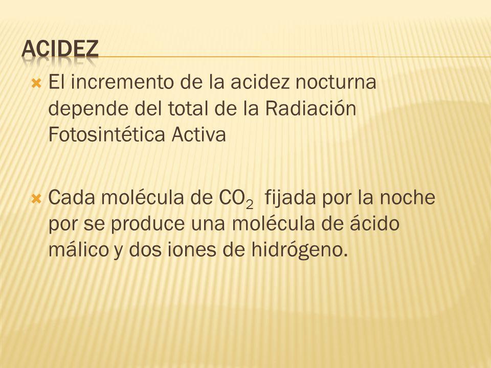 El incremento de la acidez nocturna depende del total de la Radiación Fotosintética Activa Cada molécula de CO 2 fijada por la noche por se produce un