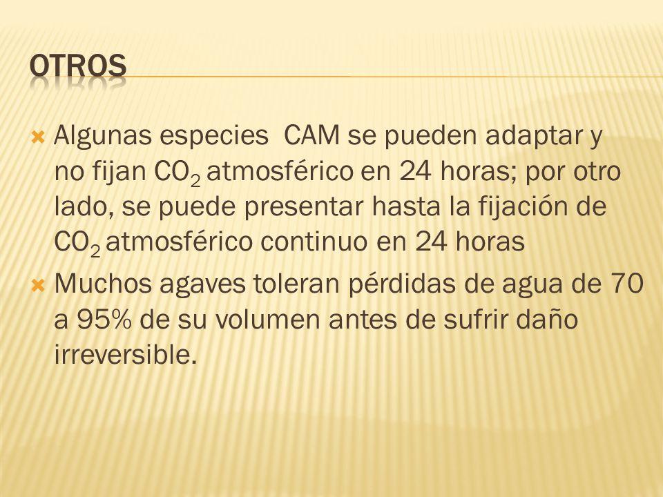 Algunas especies CAM se pueden adaptar y no fijan CO 2 atmosférico en 24 horas; por otro lado, se puede presentar hasta la fijación de CO 2 atmosféric