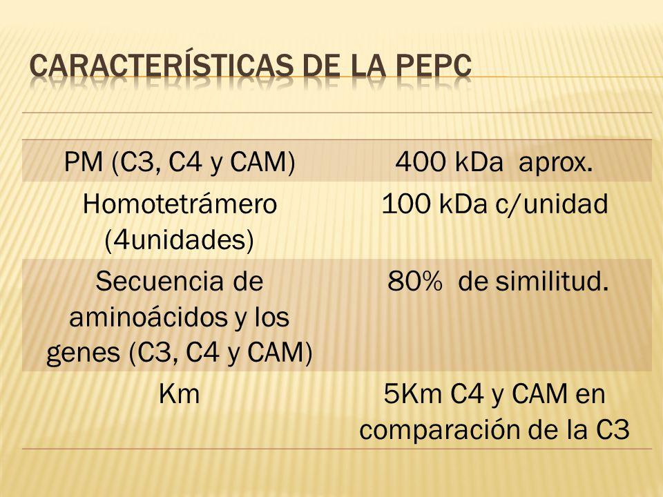 PM (C3, C4 y CAM)400 kDa aprox. Homotetrámero (4unidades) 100 kDa c/unidad Secuencia de aminoácidos y los genes (C3, C4 y CAM) 80% de similitud. Km5Km