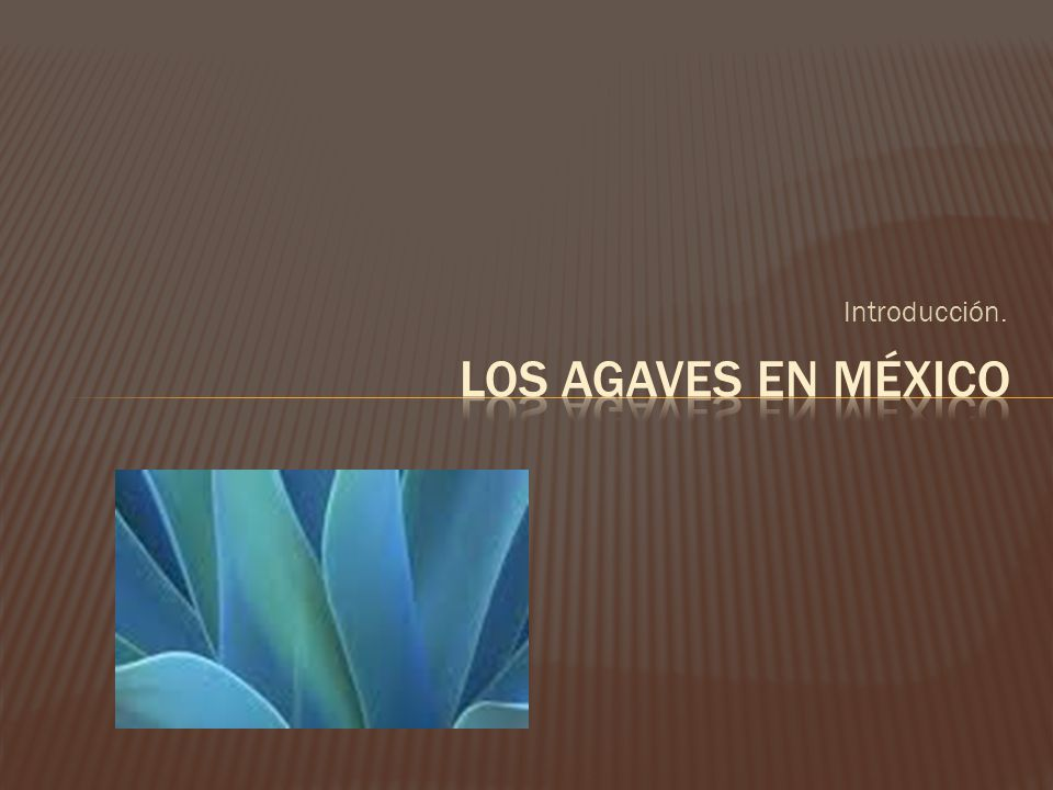 El maguey es una planta emblemática para los mexicanos.