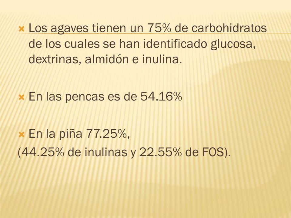 Los agaves tienen un 75% de carbohidratos de los cuales se han identificado glucosa, dextrinas, almidón e inulina. En las pencas es de 54.16% En la pi