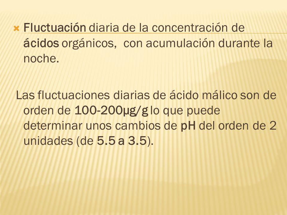 Fluctuación diaria de la concentración de ácidos orgánicos, con acumulación durante la noche. Las fluctuaciones diarias de ácido málico son de orden d