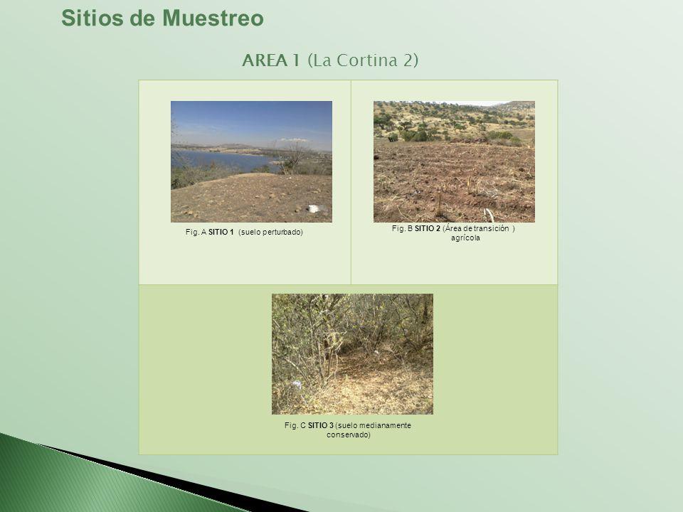 Fig. A SITIO 1 (suelo perturbado) Fig. B SITIO 2 (Área de transición ) agrícola Fig. C SITIO 3 (suelo medianamente conservado) Sitios de Muestreo AREA