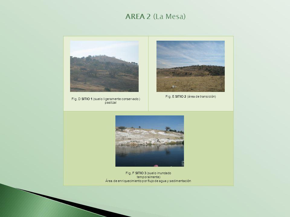 Fig. D SITIO 1 (suelo ligeramente conservado ) pastizal Fig. E SITIO 2 (área de transición) Fig. F SITIO 3 (suelo inundado temporalmente) Área de enri