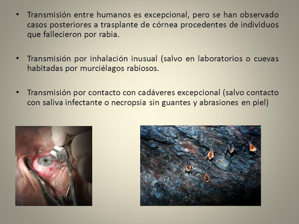 Transmisión entre humanos es excepcional, pero se han observado casos posteriores a trasplante de córnea procedentes de individuos que fallecieron por